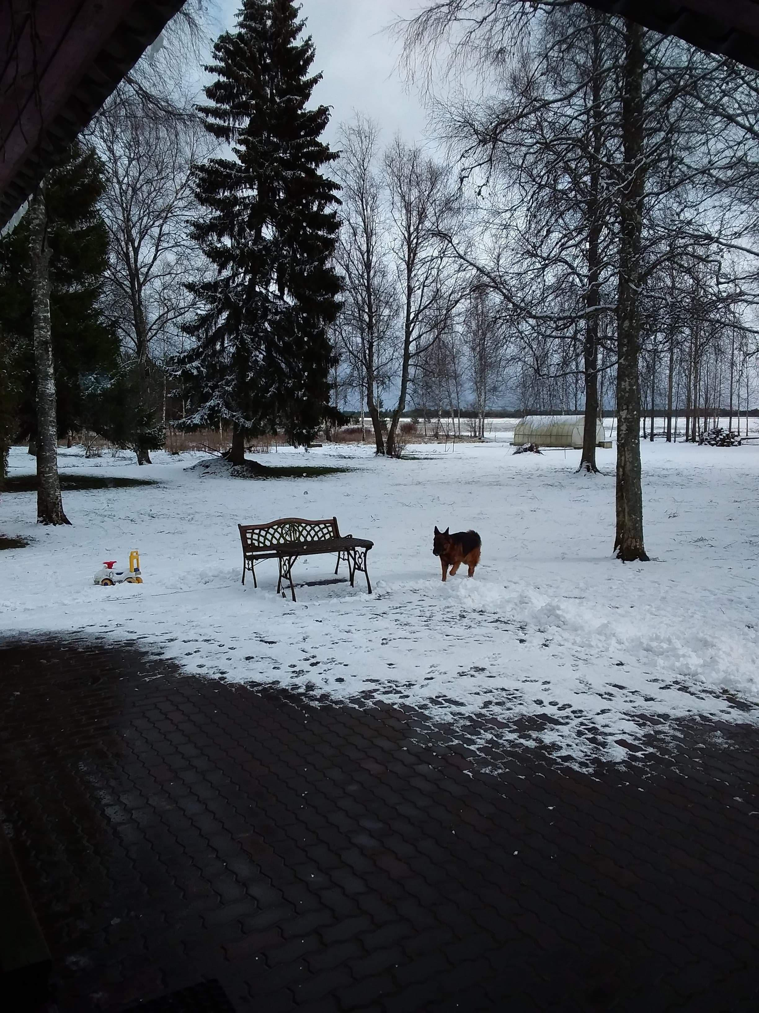 Helena-Karmeni foto lumisest aprillist
