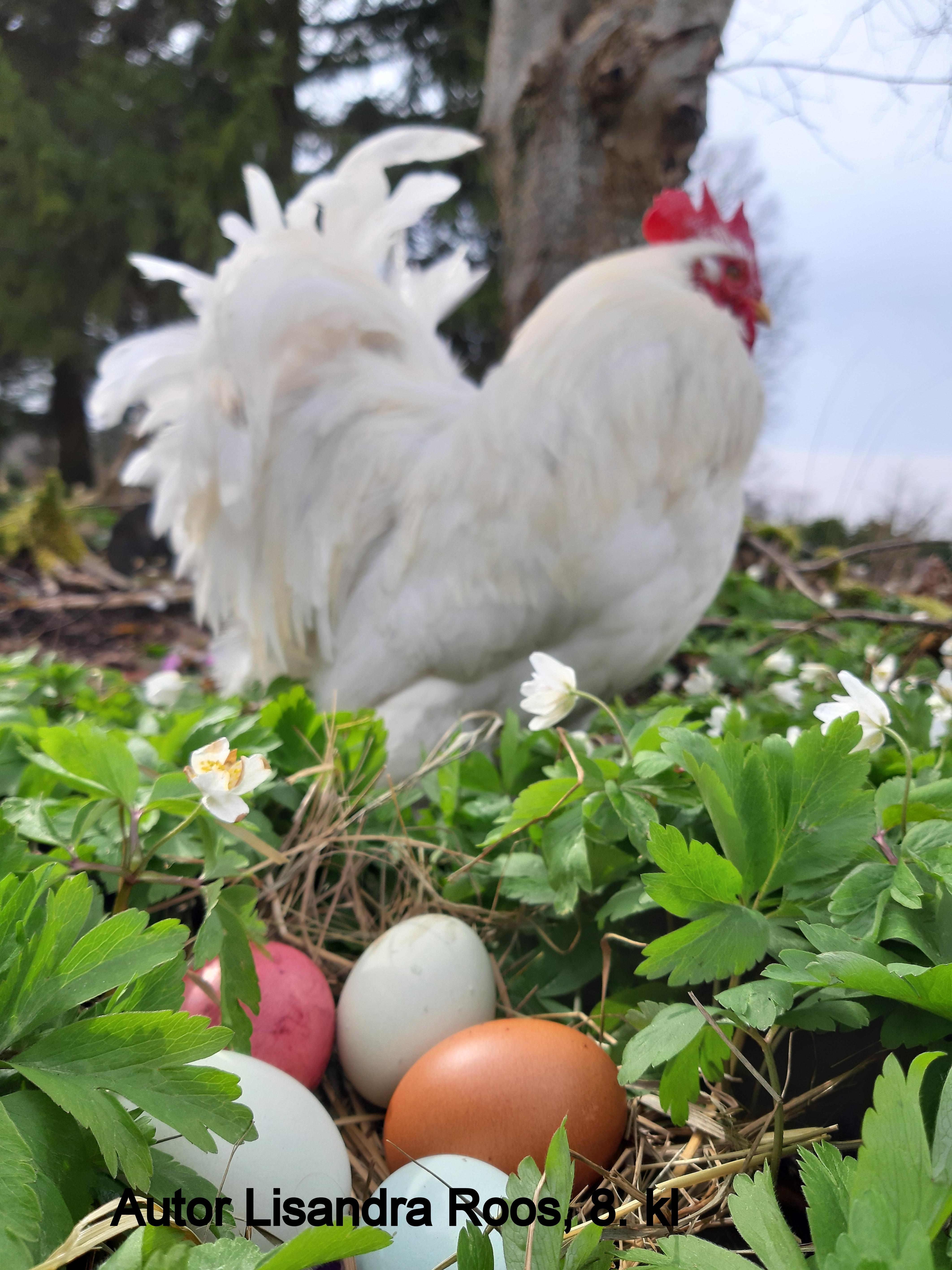 Lisandra Roos kompositsioon kana ja munadega